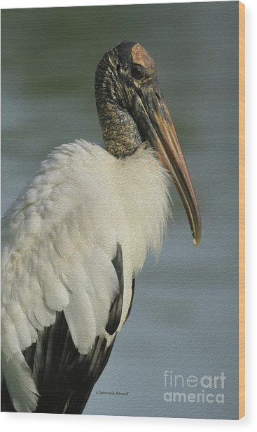 Wood Stork In Oil Wood Print