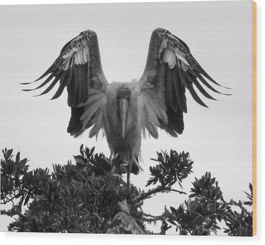 Wood Stork Spread Wood Print