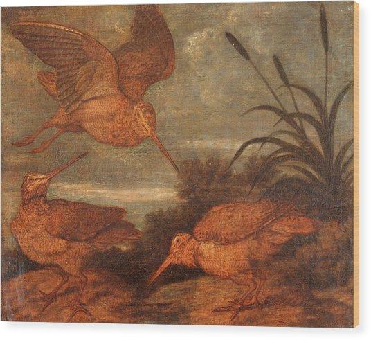 Woodcock At Dusk, Francis Barlow, 1626-1702 Wood Print