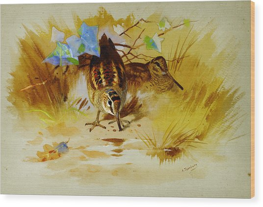 Woodcock In A Sandy Hollow Wood Print