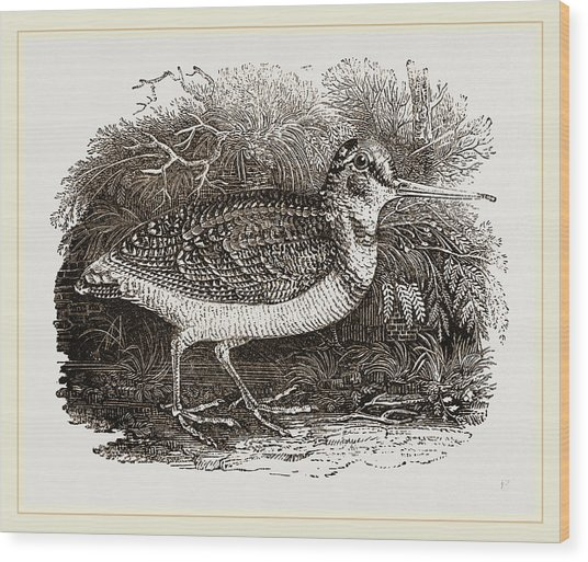 Woodcock Wood Print