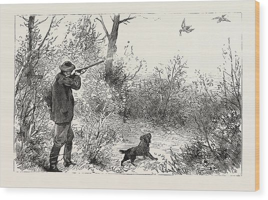 Woodcock Shooting Wood Print