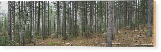 Wooded Panorama In Our Northeast Wood Print
