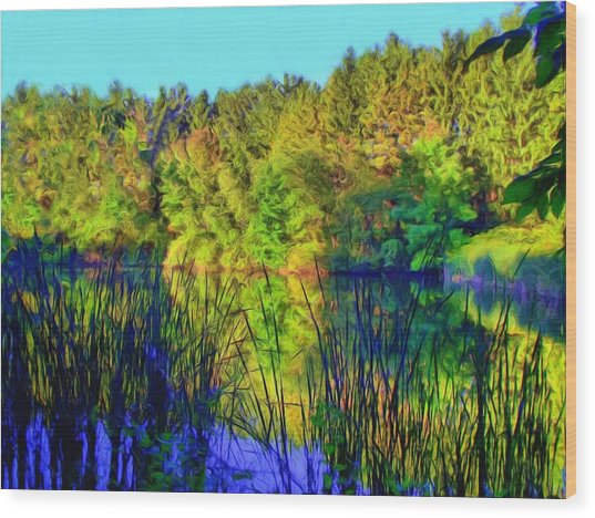 Wooded Shore Through Reeds Wood Print