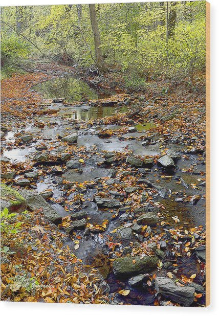 Woodland Brook In Fall Montgomery County Pennsylvania Wood Print