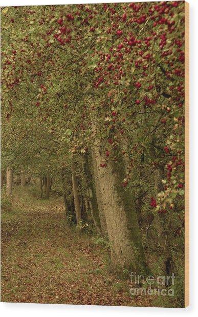 Woodland In Autumn Wood Print