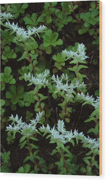 Wood Print featuring the photograph Woodland Stonecrop by Daniel Reed