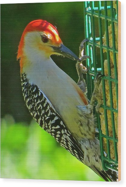 Woodpecker 102 Wood Print by Patsy Pratt