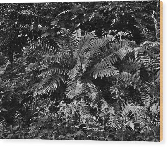 Wood's Ferns  Wood Print