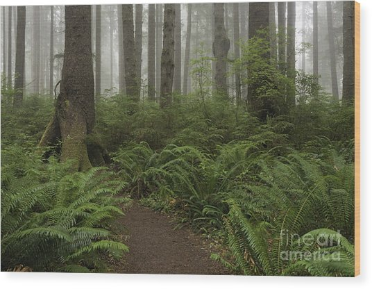 Woods Trail Wood Print