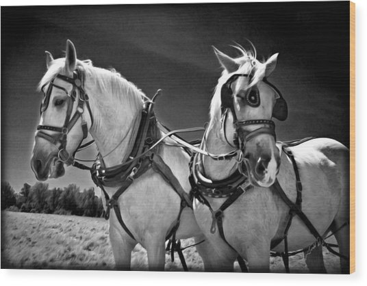 Workhorses Wood Print by Williams-Cairns Photography LLC