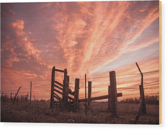 Working Cattle/ End Of Day Wood Print