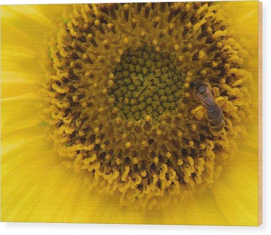 Working Honey Bee Wood Print