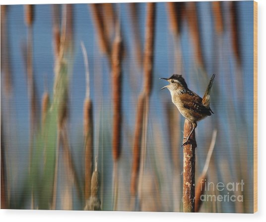 Wren Singing Wood Print