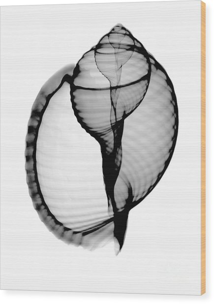 X-ray Of Scotch Bonnet Wood Print