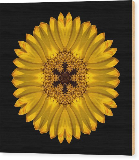 Yellow African Daisy Flower Mandala Wood Print