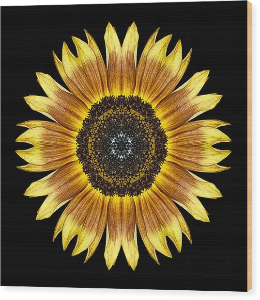 Yellow And Brown Sunflower Flower Mandala Wood Print