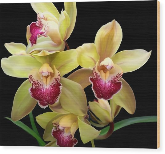 Yellow And Pink Orchids Wood Print
