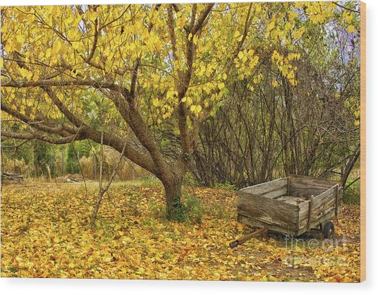 Yellow Autumn Leaves And Wooden Wagon Wood Print