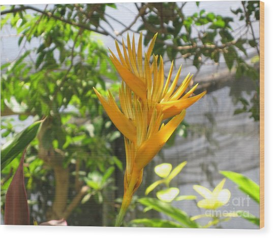 Yellow Bird Of Paradise Wood Print