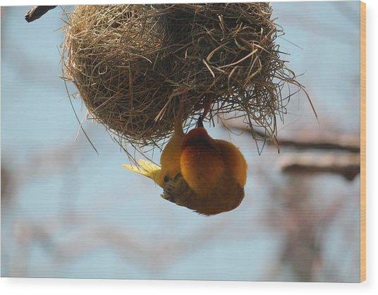 Yellow Bird Retuns To Nest Wood Print
