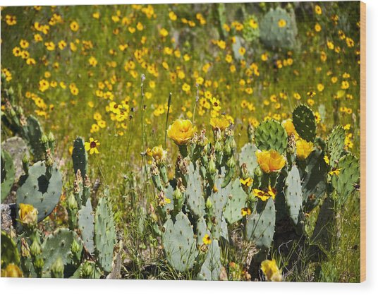 Yellow Blooms Wood Print by Mark Weaver