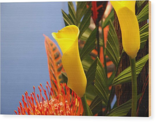 Wood Print featuring the photograph Yellow Calla Lilies by Jennifer Ancker