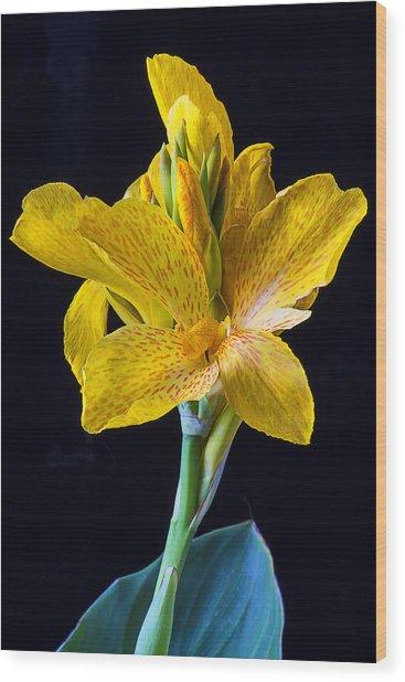 Yellow Canna Flower Wood Print