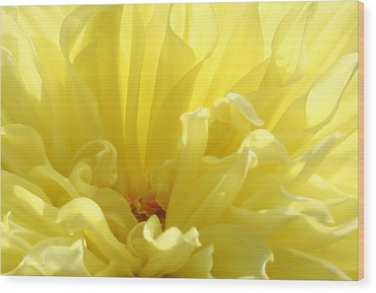 Yellow Dahlia Burst Wood Print