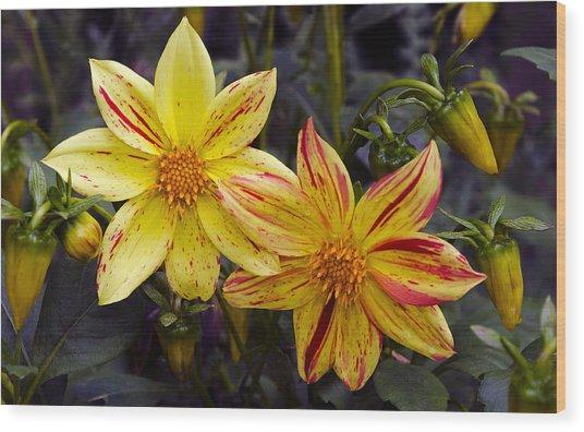 Yellow Dahlia Wood Print