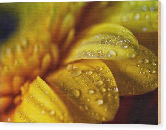 Yellow Daisy Drizzle Wood Print