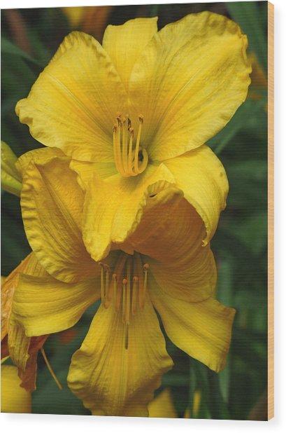 Yellow Day Lilies Wood Print