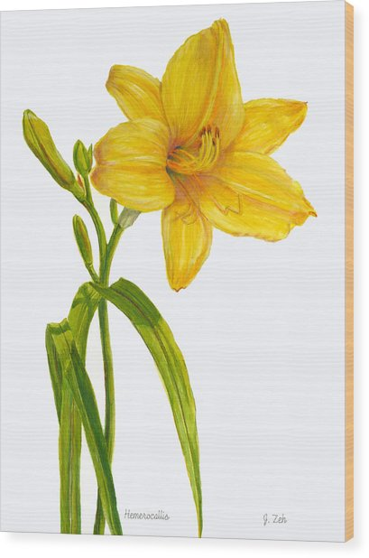 Yellow Daylily - Hemerocallis Wood Print