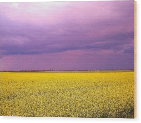 Yellow Field Purple Sky Wood Print
