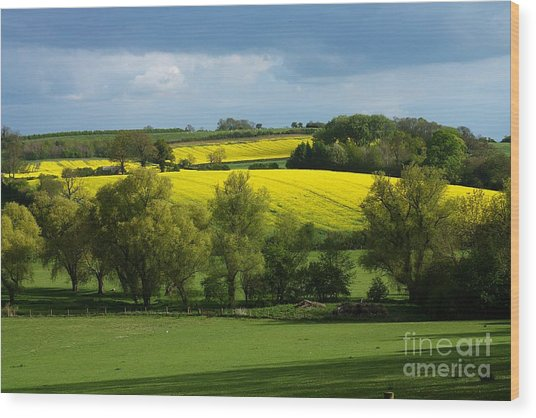 Wood Print featuring the photograph Yellow Fields In The Sun by Jeremy Hayden