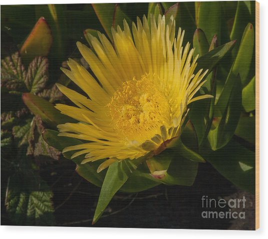 Yellow Flower 1.7103 Wood Print by Stephen Parker