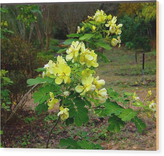 Yellow Flower Bush Wood Print by Judith Russell-Tooth