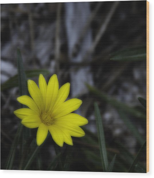 Yellow Flower Soft Focus Wood Print
