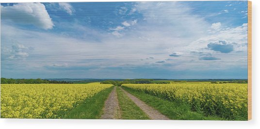 Yellow Flowers In A Field Wood Print by Wladimir Bulgar/science Photo Library
