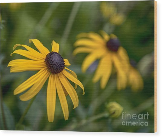 Yellow Flowers Wood Print
