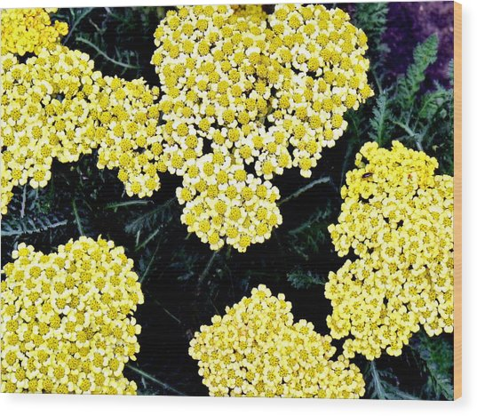 Yellow Flowers Wood Print by Sanford