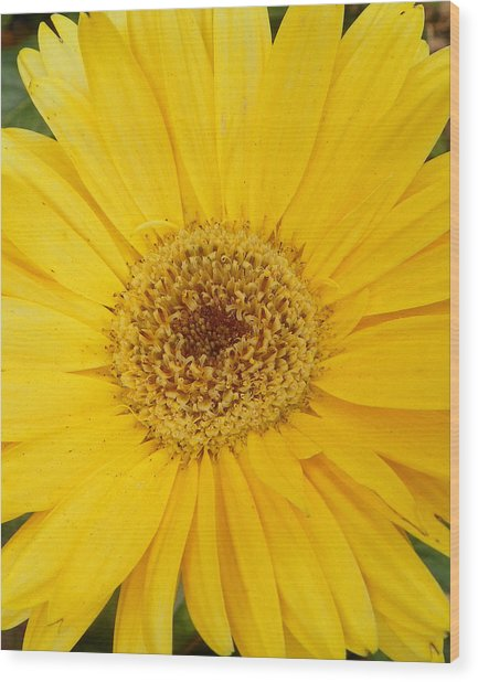 Yellow Fusion Wood Print by Sheri McLeroy