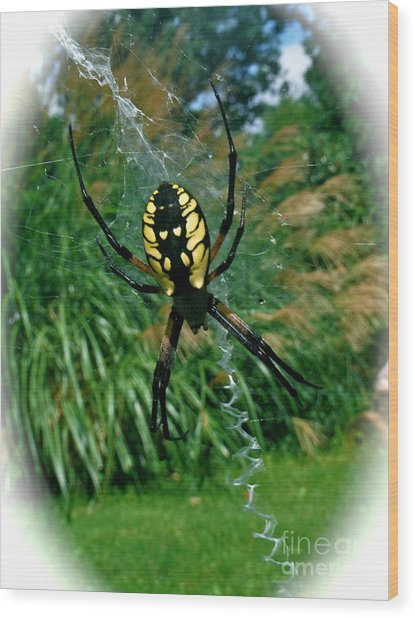 Yellow Garden Spider Wood Print by Linda Walker