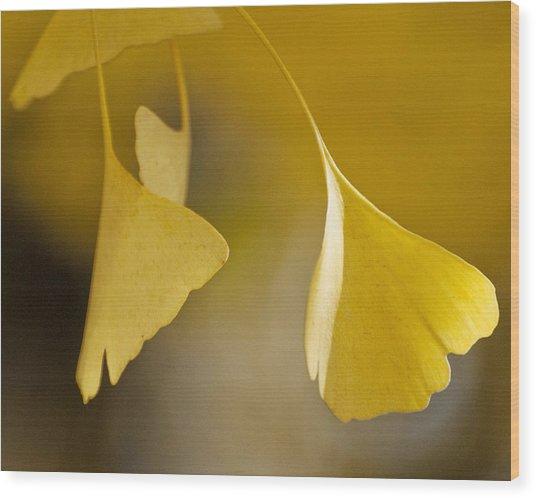Yellow Ginkgo Wood Print