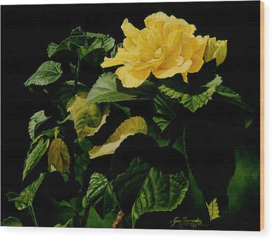 Yellow Hibiscus Wood Print by Gary  Hernandez
