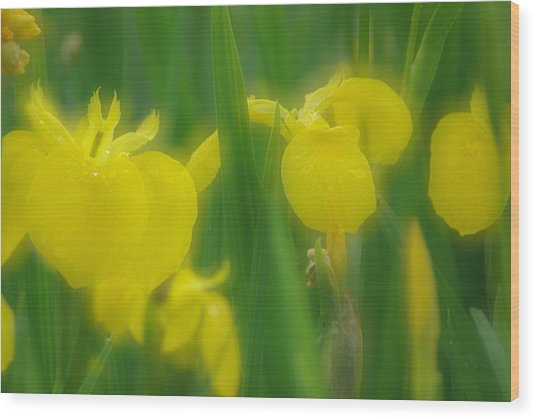 Yellow Iris Double Wood Print