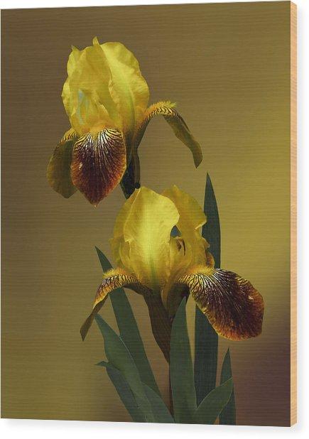 Yellow Iris Wood Print