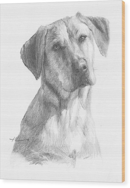 Yellow Lab Dog Pencil Portrait Wood Print by Mike Theuer