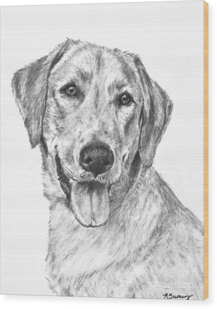Yellow Lab Head And Shoulders Wood Print
