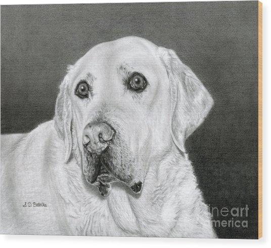 Yellow Labrador Retriever- Bentley Drawing By Sarah Batalka